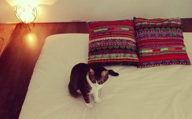 猫のいるタイ古式マッサージサロン にゃんぐりら